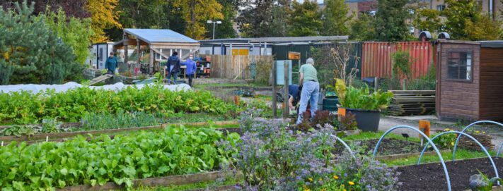 The Impact of our Greenspace Programmes